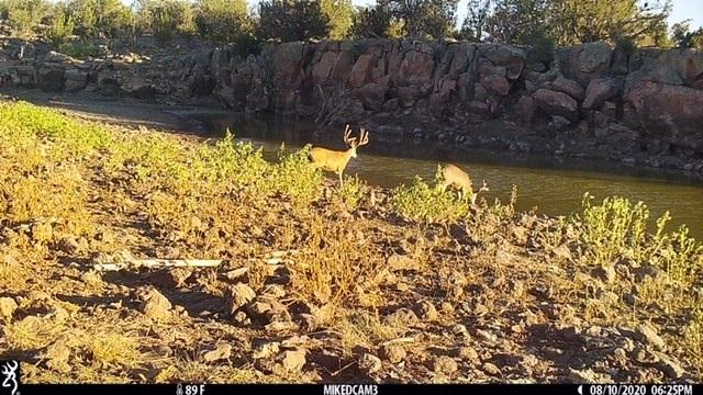 Name:  buck, 8.10.20.jpg Views: 180 Size:  153.6 KB