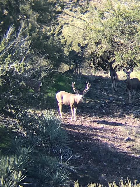 Name:  5x4 muley, 1.4.20.jpg Views: 185 Size:  172.3 KB