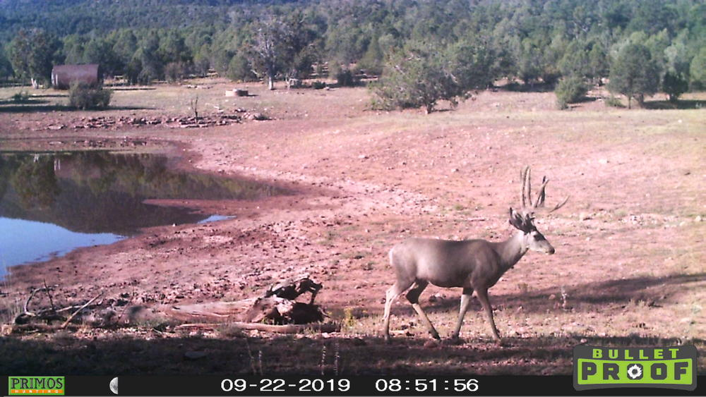 Name:  Sec 13 buck (2), 9.28.19.jpg